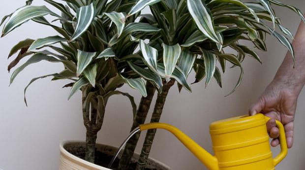 Комнатные растение уход