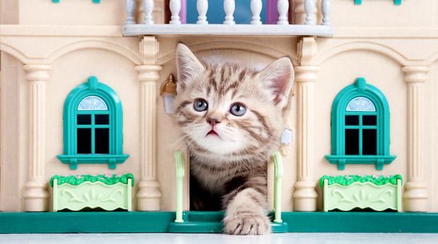 Новоселье с котом