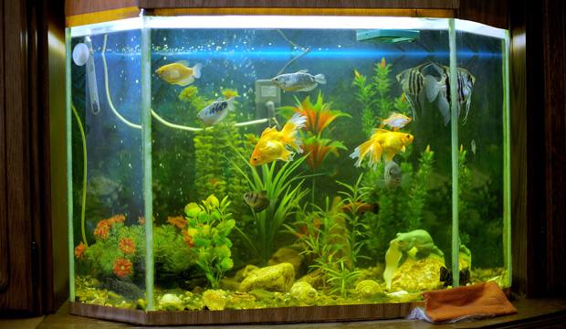 Как сделать аквариум искусственный фото 497